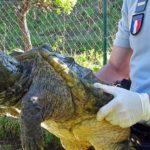 BÉZIERS. Découverte de plusieurs espèces de tortues dangereuses autour du canal du midi !