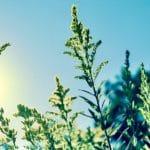 HÉRAULT. 8 remèdes naturels contre les coups de soleil !