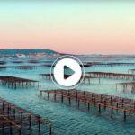 ÉTANG DE THAU. De splendides images aériennes de la lagune !